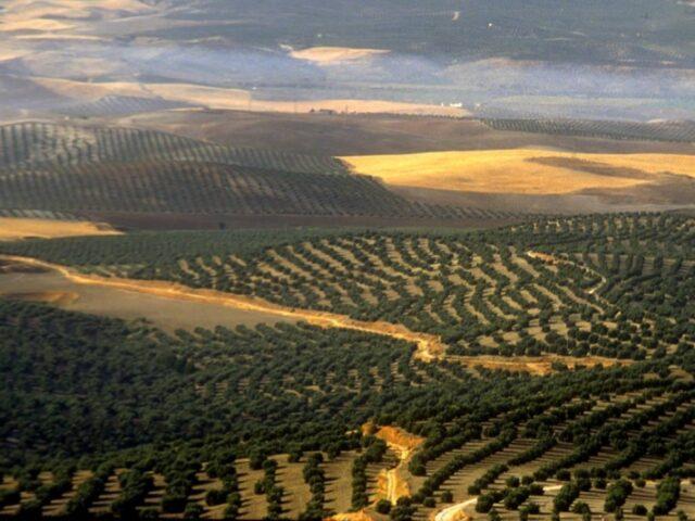 España luchará contra los aranceles de EE UU a sus productos agroalimentarios