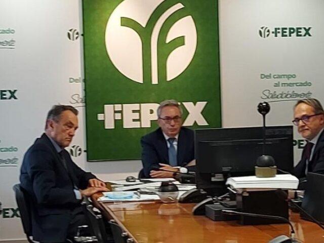 FEPEX considera que el sector no puede asumir un Brexit sin acuerdo