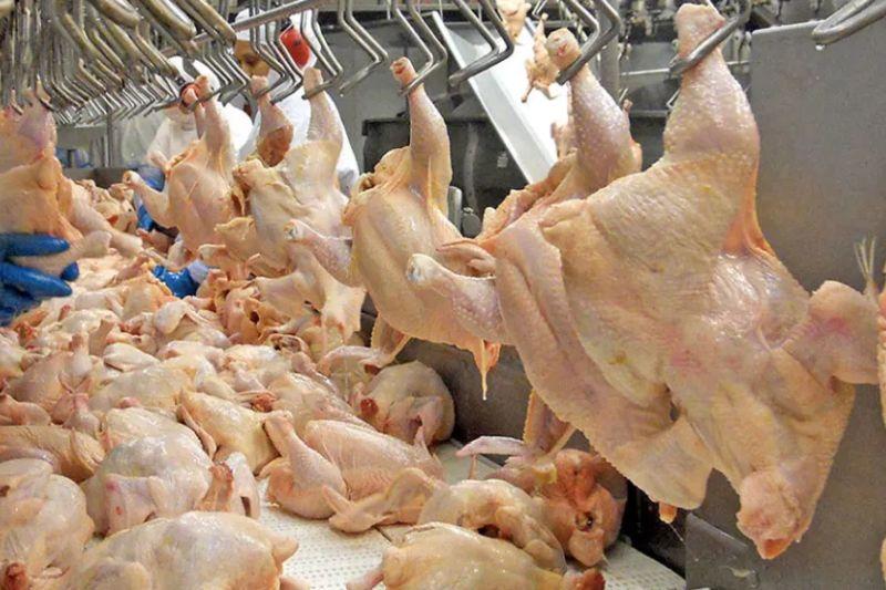 posicionar-productos-avicolas-en-mercados-internacionales