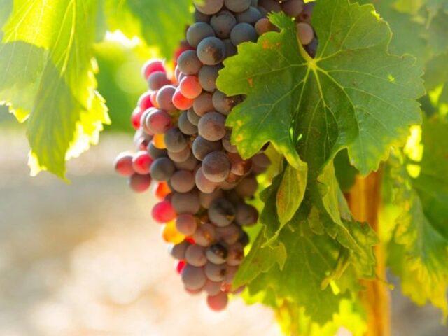 El vino español atrae 816,18 M€ de inversión extranjera en la última década