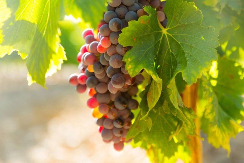 sector-del-vino-atraccion-de-inversion-extranjera