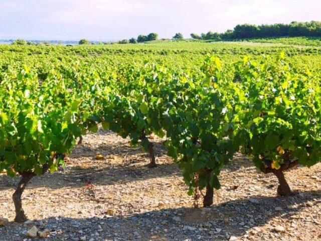 La FEV muestra su interés para que el sector del vino pueda beneficiarse de los fondos europeos