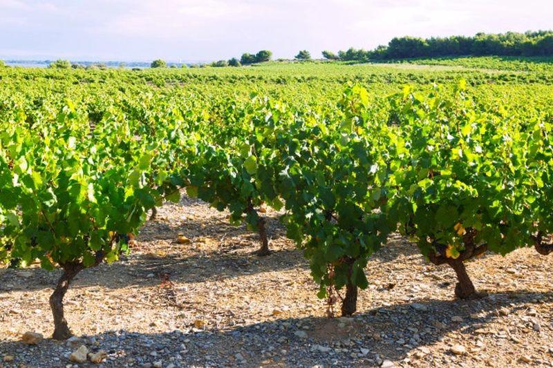 sector-del-vino-fondos-europeos
