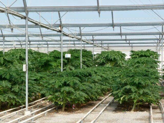 Andalucía lidera las exportaciones agroalimentarias