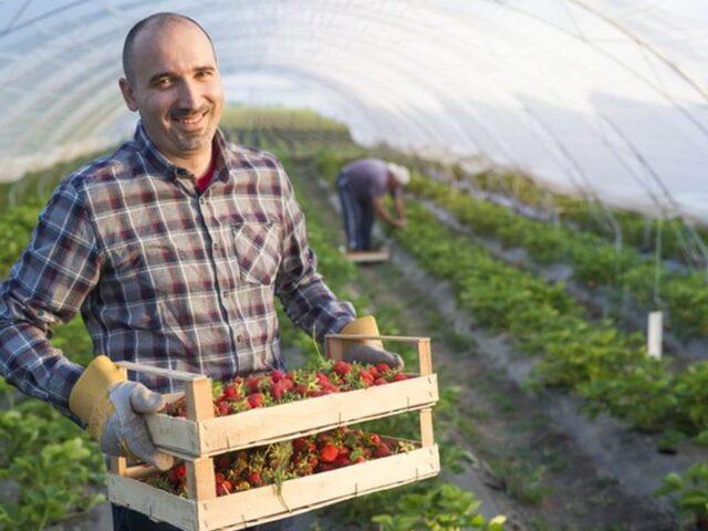 El sector agroalimentario gana peso en la economía Española