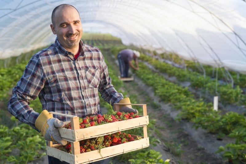 sector-agroalimentario