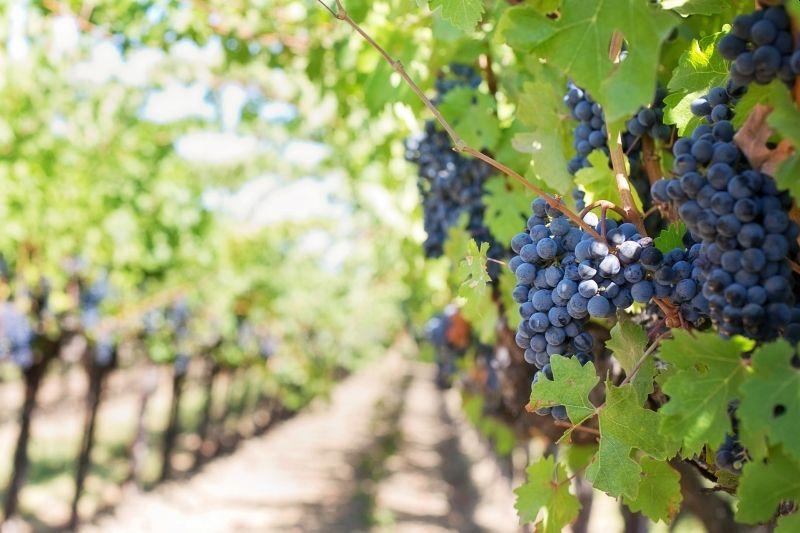 las-exportaciones-de-vino-aumentan-en-el-ultimo-semestre